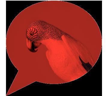 00-LenouvelAppartement-3-perroquet-rouge
